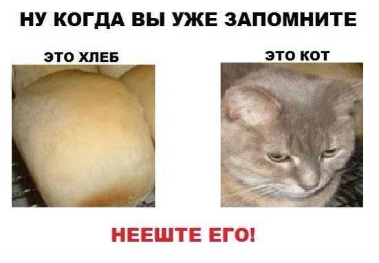 Мое уважение кот