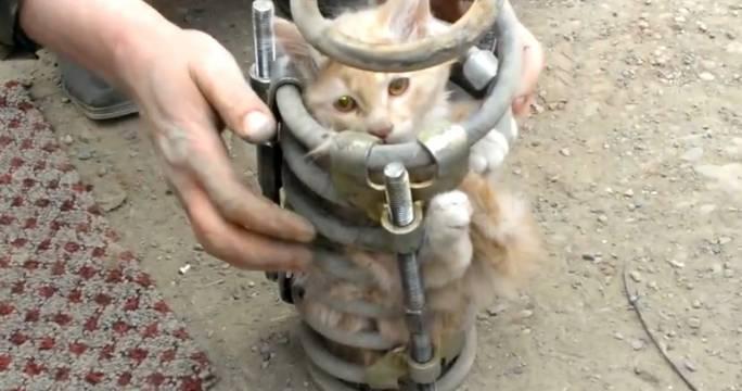 Кот механик, котёнок в пружине