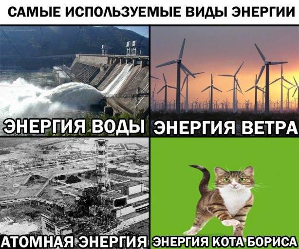 Секрет энергии кота Бориса