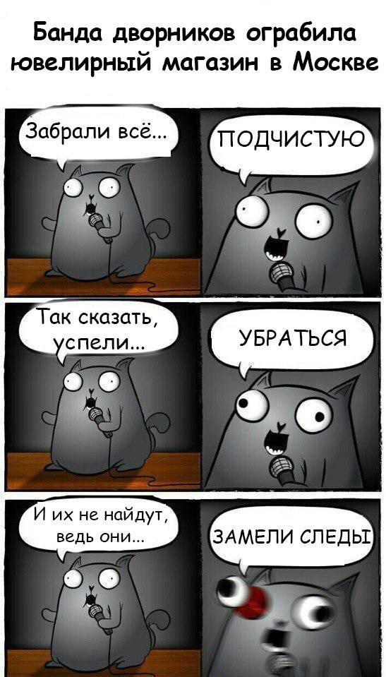 Кот стендапер или стендап-кот или кот каламбурист