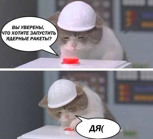 Кот с кнопкой
