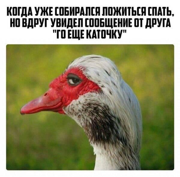"""""""Утка строящая глазки"""" или """"Хитрая утка"""""""